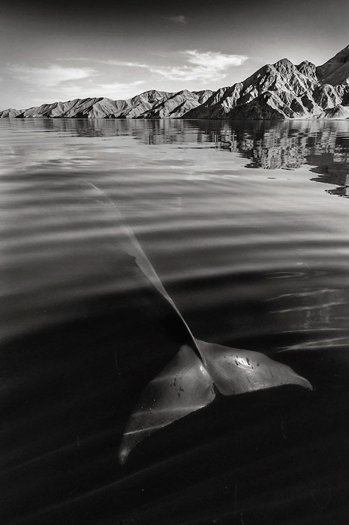 whales dolphins sea animal photography marine life christopher swann