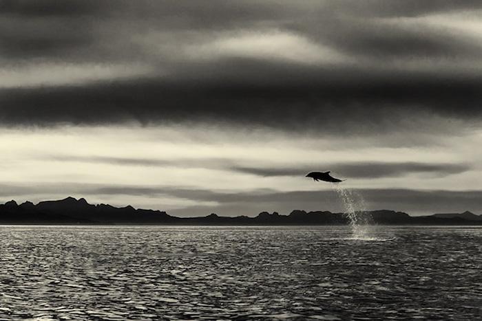 Christopher Swann deniz hayvanları fotoğrafları