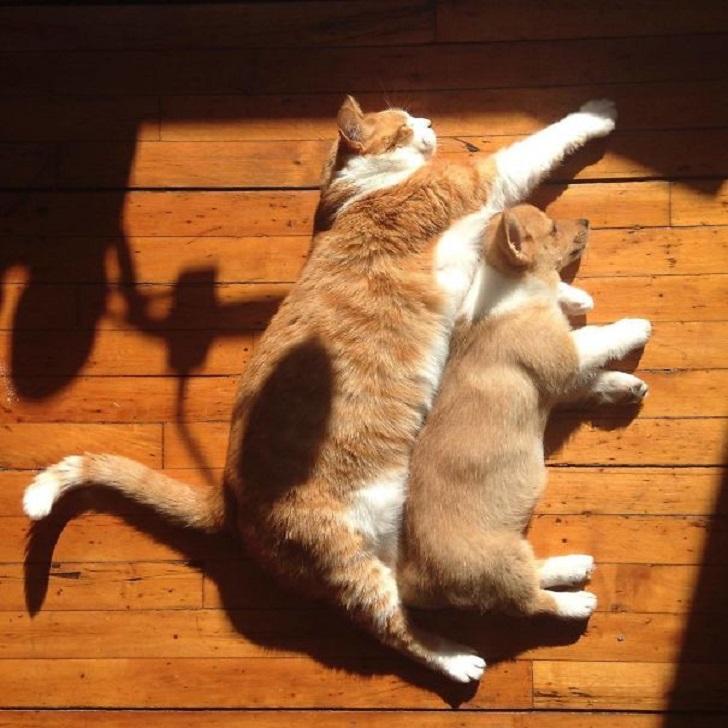 kedi kopek
