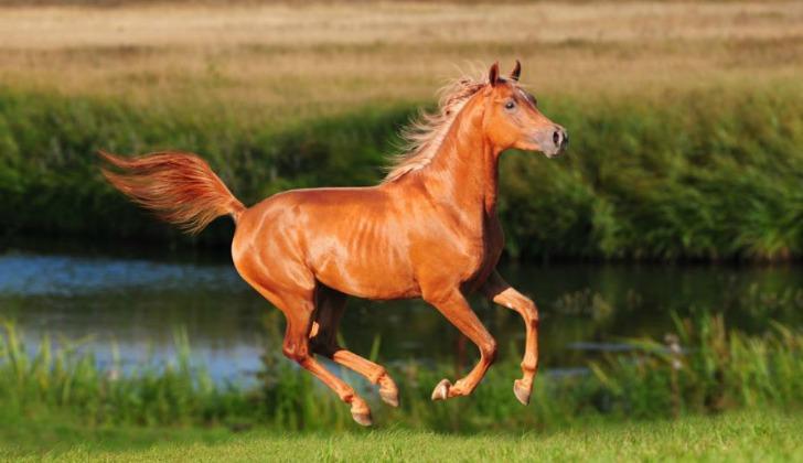 hayvanlar hakkinda ilginc bilgiler atlar