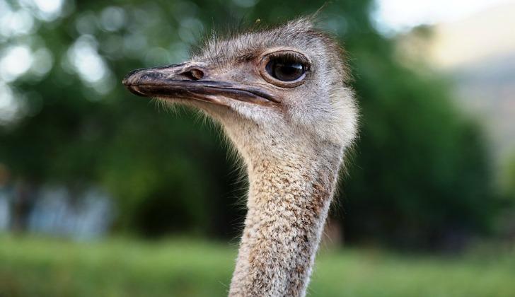 hayvanlar hakkinda ilginc bilgiler emu kusu