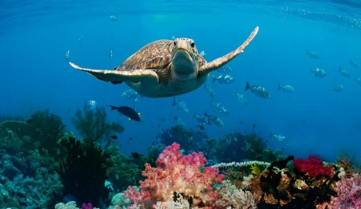 hayvanlar hakkinda ilginc bilgiler okyanuslar