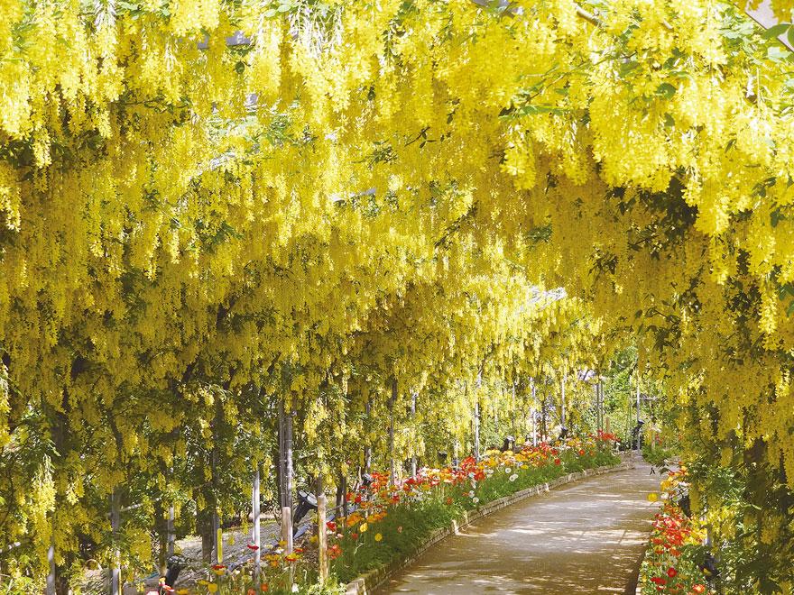 bahar festiva japonya