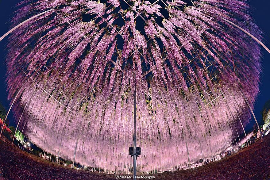 festival japonya