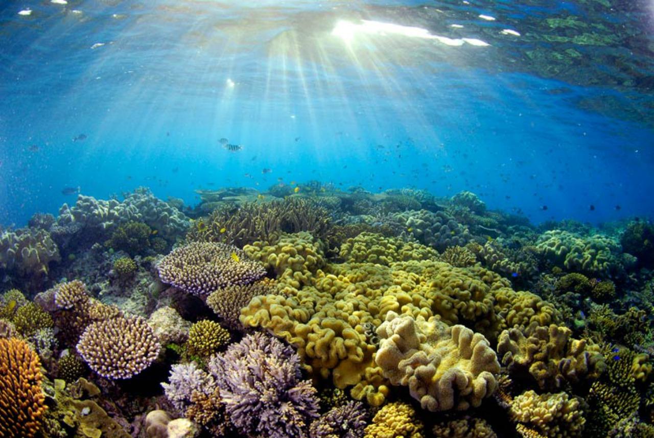 chasing coral belgesel