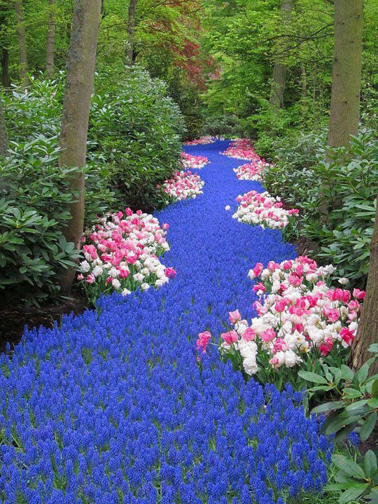 river of flowers holland