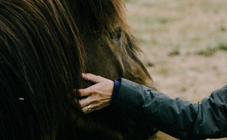 hayati dolu dolu yasamanin yollari hayvanlarla bag kur
