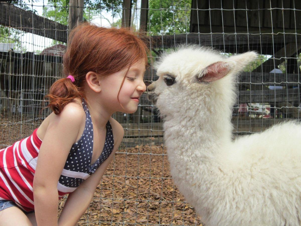 çocuk hayvandostluğu Kopya