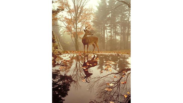 sonbahari sevdirecek fotograflar galeri