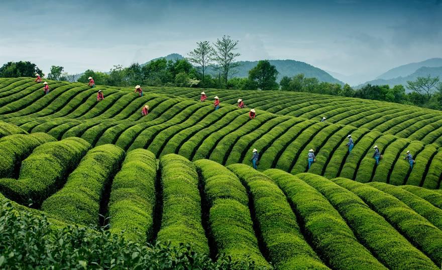 Çaydan dalgalar