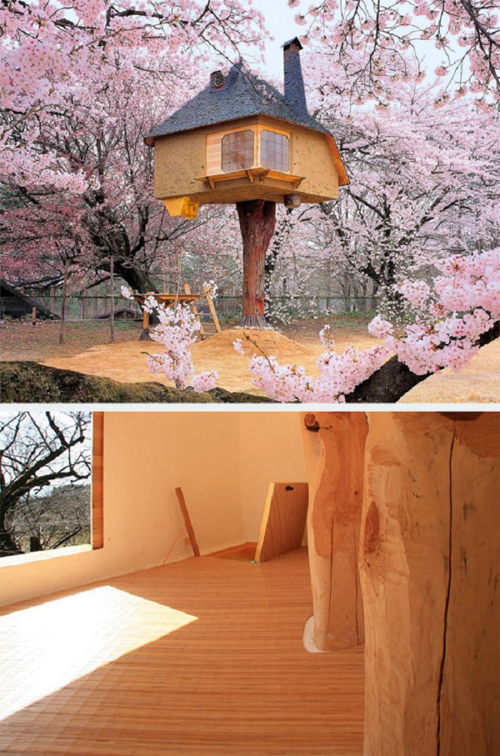 cay evi japonya