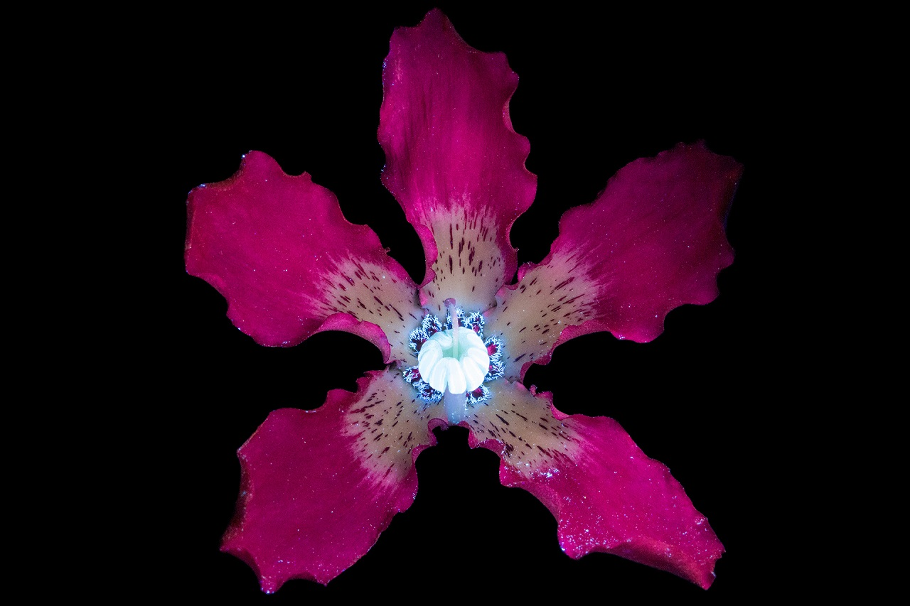 Craig Burrows / Ultraviolet-Induced Visible Fluorescence
