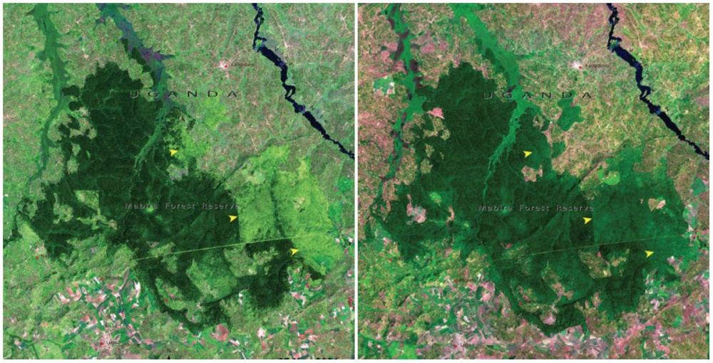Mabira Ormanı, Uganda