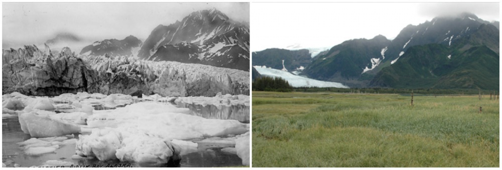 Pedersen Buzulu, Alaska