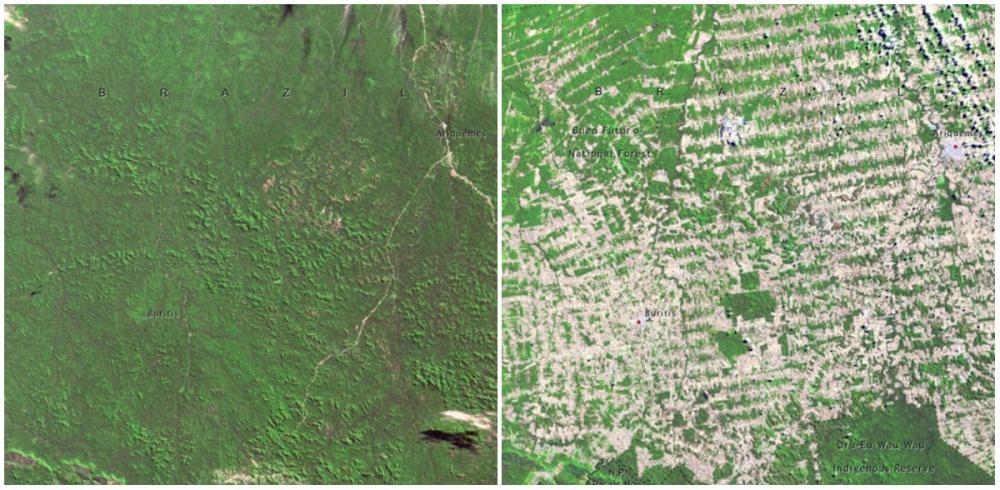 Rondonia Ormanları, Brezilya