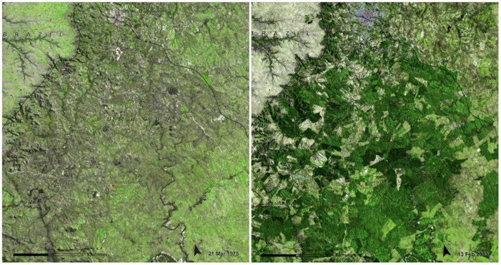 Uruguay Ormanları