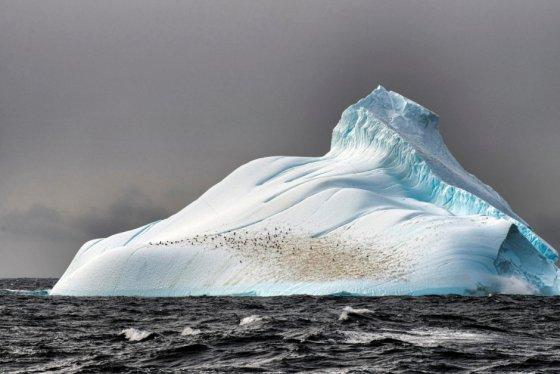 Antarktika buzulları