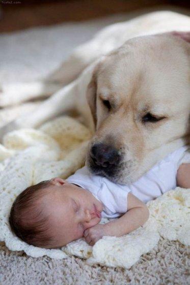 bebeği-uyutan-köpek