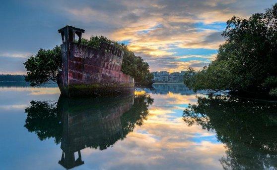 102 yıllık yüzen orman, Avustralya