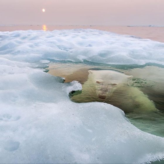 national-geographic-photo-contest-winners-2013-1