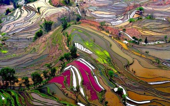 Yunnan Pirinç Tarlaları, Çin