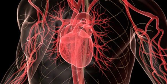 Beynimiz Kalbimizi Kandırıyor Mu?