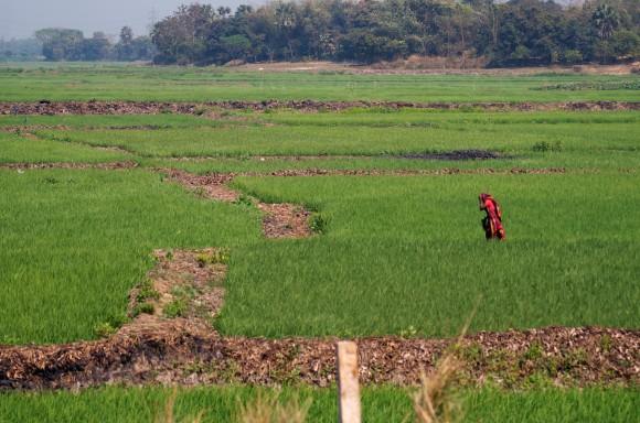 Bangladeş Notları - II
