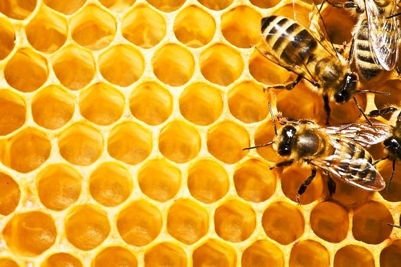 Arı poleninin Faydaları Nelerdir?