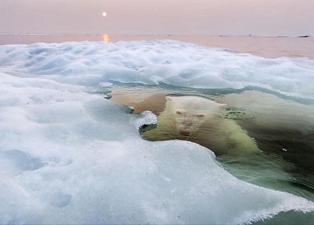 National Geographic'den 2013'ün En iyileri