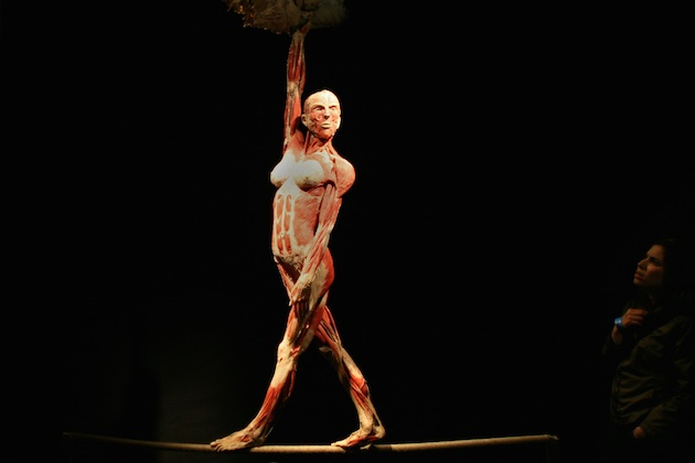 Body Worlds Exhibition Opens In Haifa