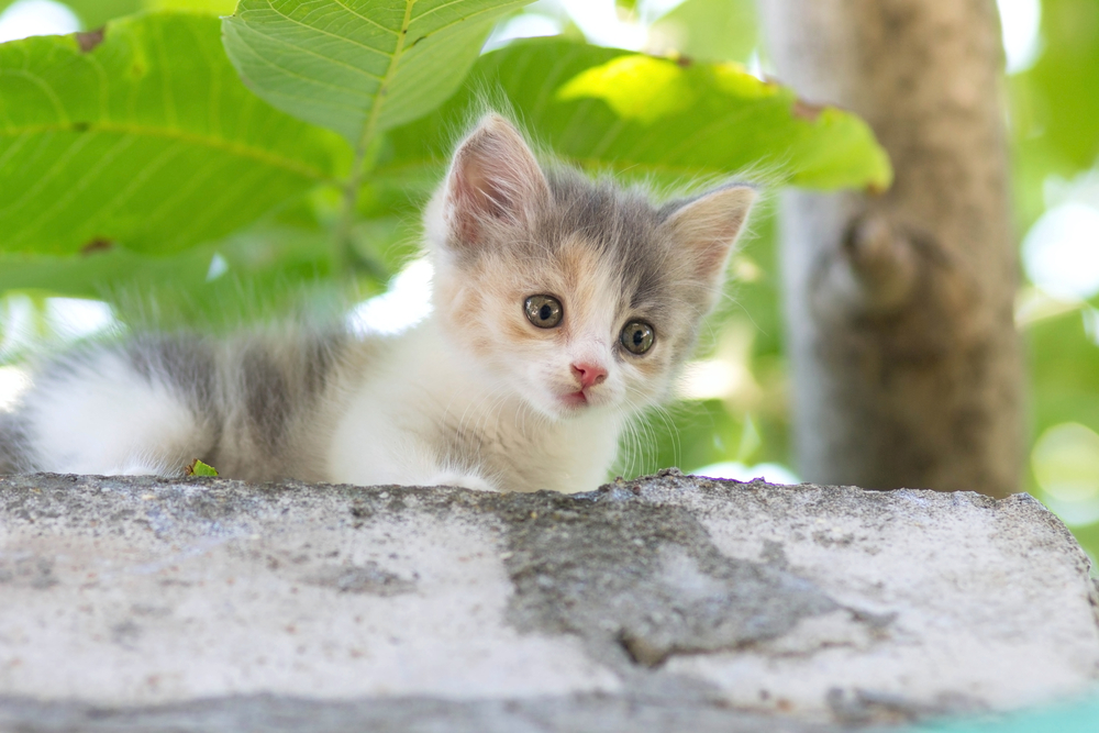 Evcil hayvan bakarken çevre dostu olmak için 7 öneri
