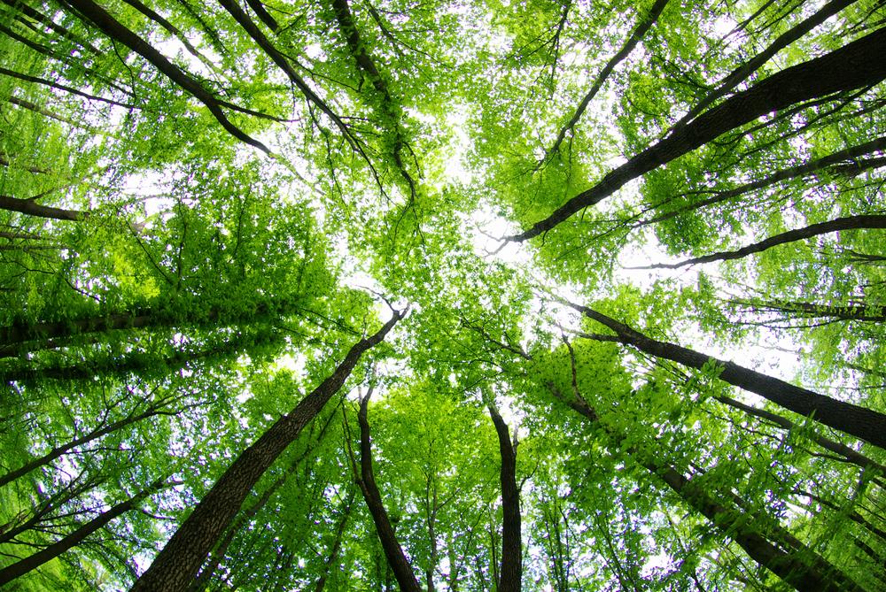 Hepimizin ihtiyaç duyduğu orman banyosu nedir?