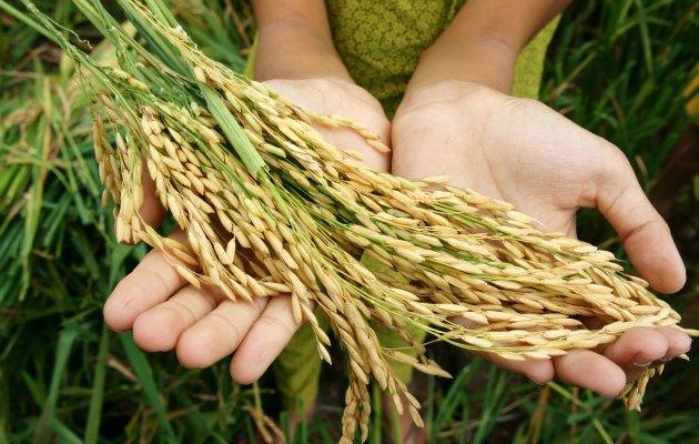 İklim değişikliği küresel gıda sistemini tehlikeye atıyor.