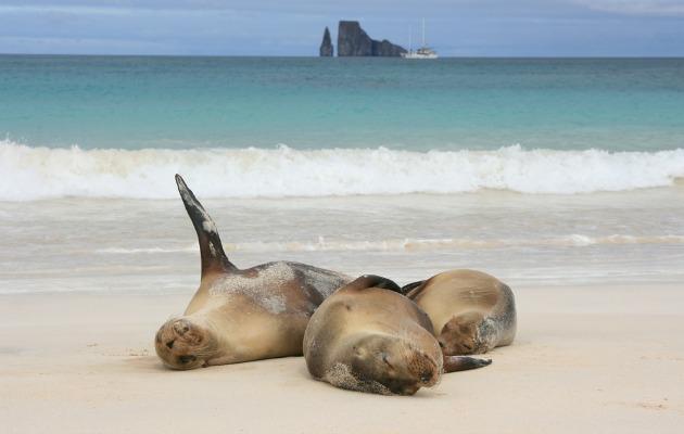 Galapagos'ta deniz aslanları